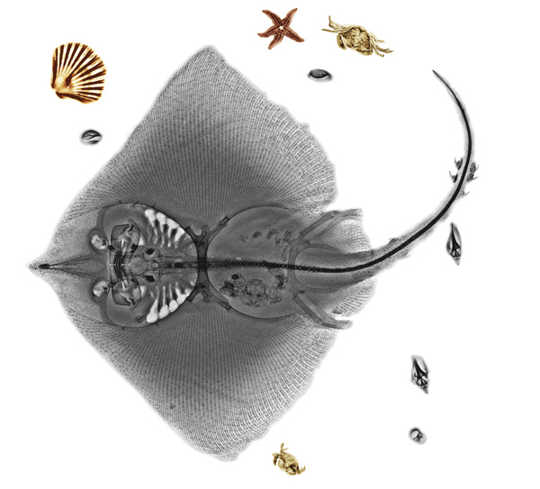 animal-x-rays7