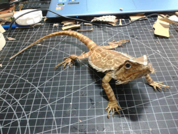 bearded-dragon14