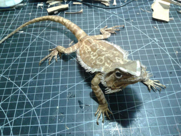 bearded-dragon151