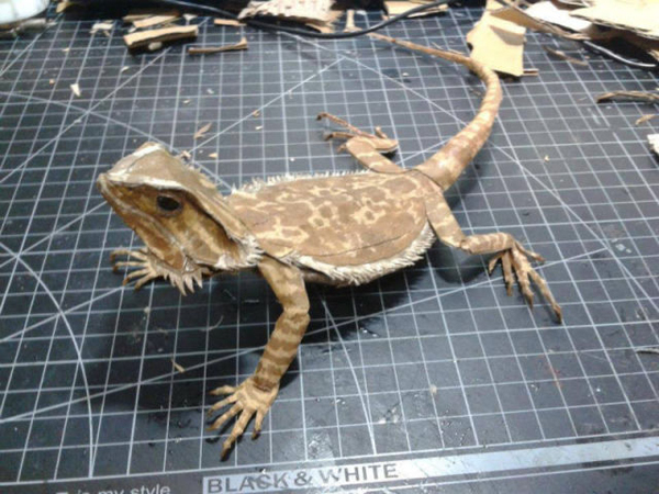 bearded-dragon16