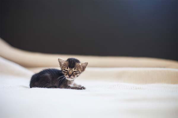 kitten-rescue10