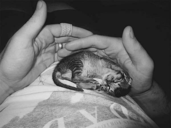 kitten-rescue11