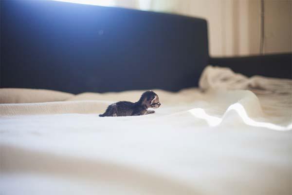 kitten-rescue12