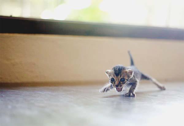 kitten-rescue13
