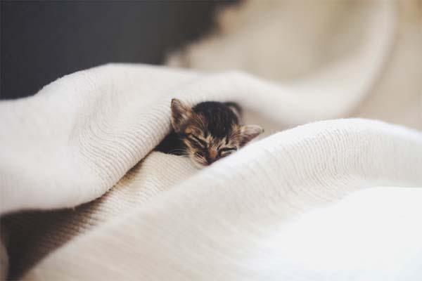 kitten-rescue14