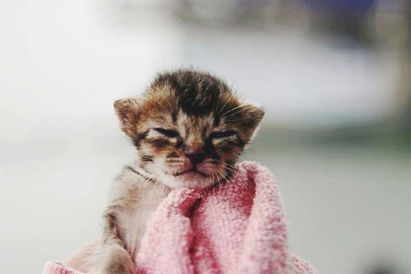 kitten-rescue4