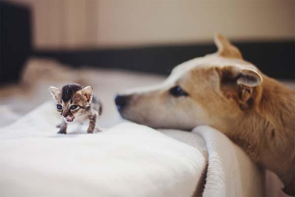 kitten-rescue6