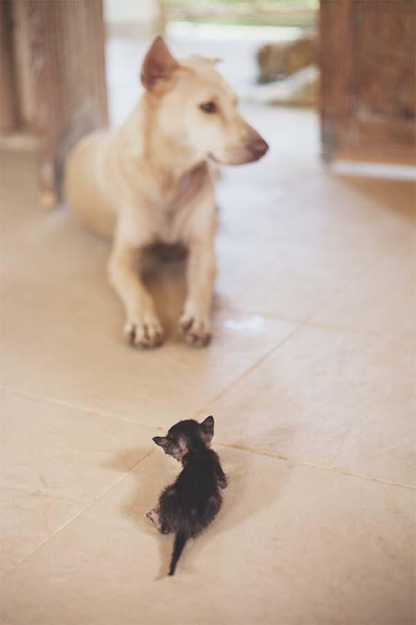 kitten-rescue7
