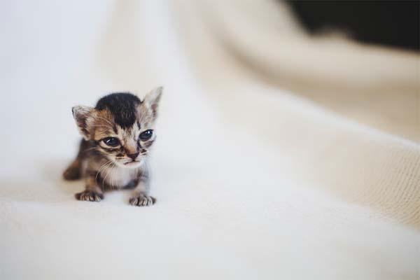 kitten-rescue8