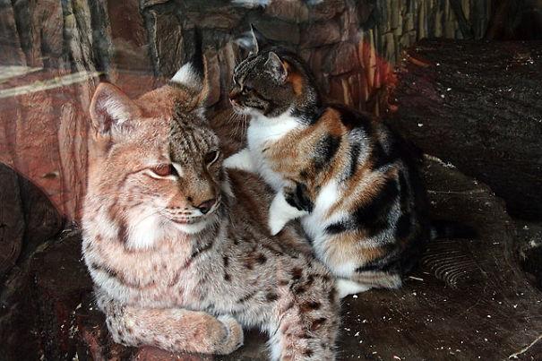 cat-lynx-bff-02