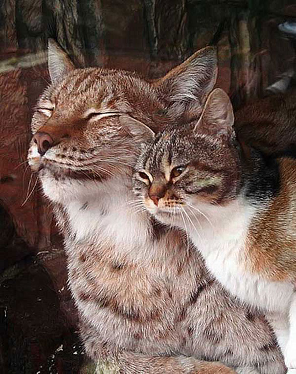 cat-lynx-bff-04