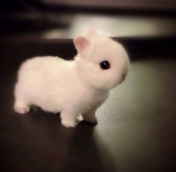 cutest-small-animals4