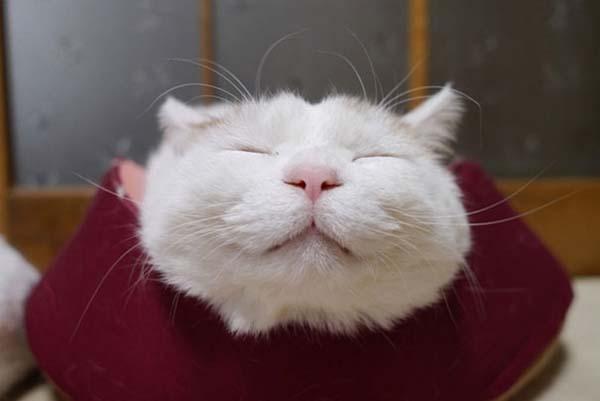 zen-cat3