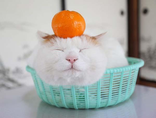 zen-cat5