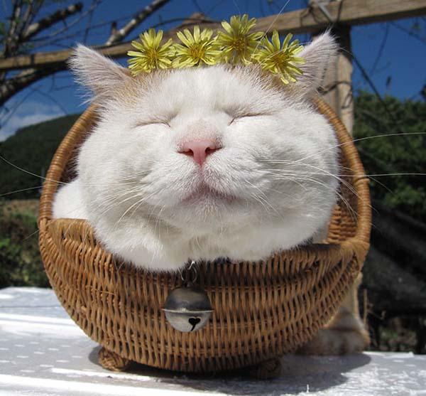 zen-cat8