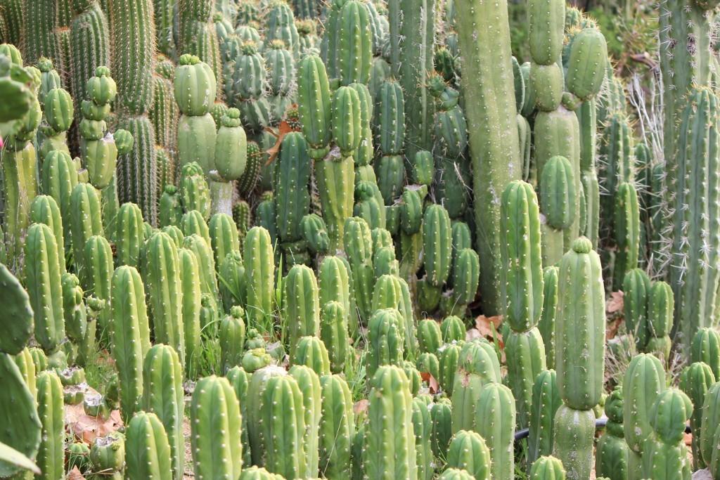 cactus-header-1024x683