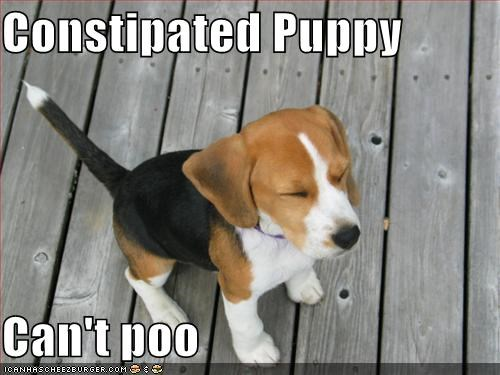 constipated-dog