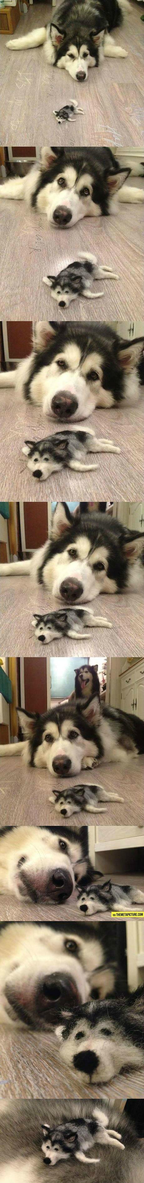 dog-meta