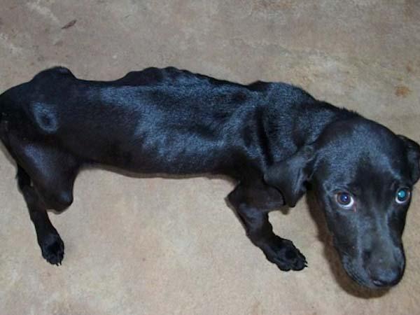 rescue-dogs25