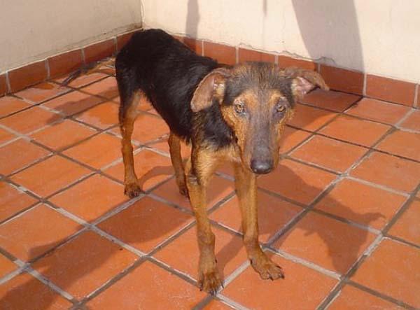 rescue-dogs27