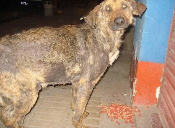 rescue-dogs38