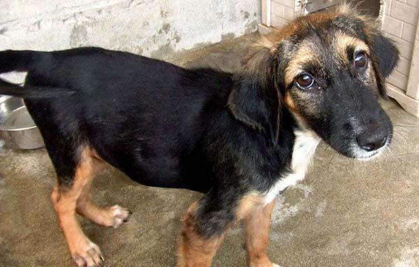 rescue-dogs6