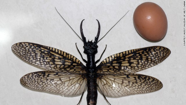 140722030211-giant-bug-china-horizontal-gallery1