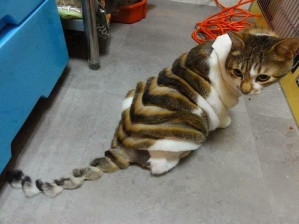 16189-weird_haircut_cat_05_09_2012-600x449