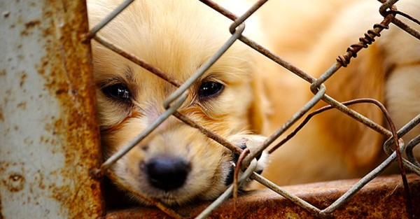 news-lonely-dog-in-cage-104114993-600x313