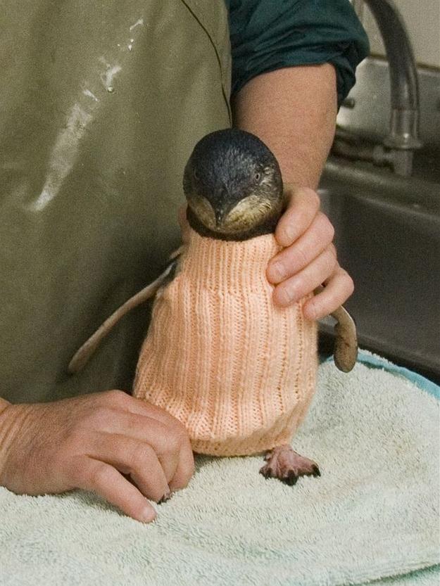penguin-sweater-4