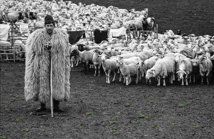sheep-herds-around-the-world-121