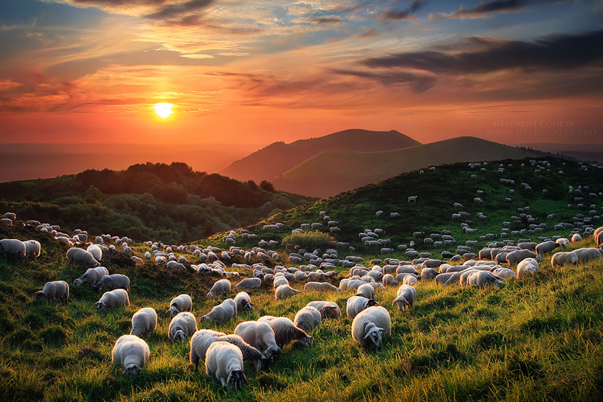 sheep-herds-around-the-world-13