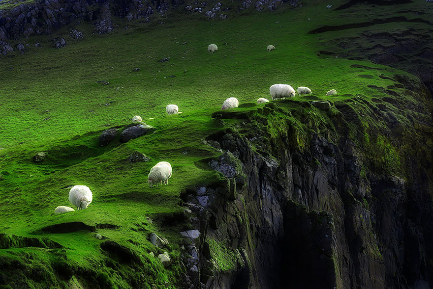 sheep-herds-around-the-world-151