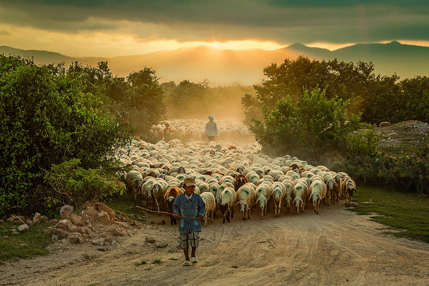 sheep-herds-around-the-world-31