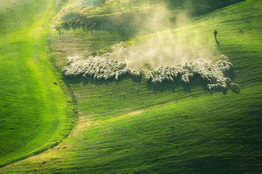 sheep-herds-around-the-world-91